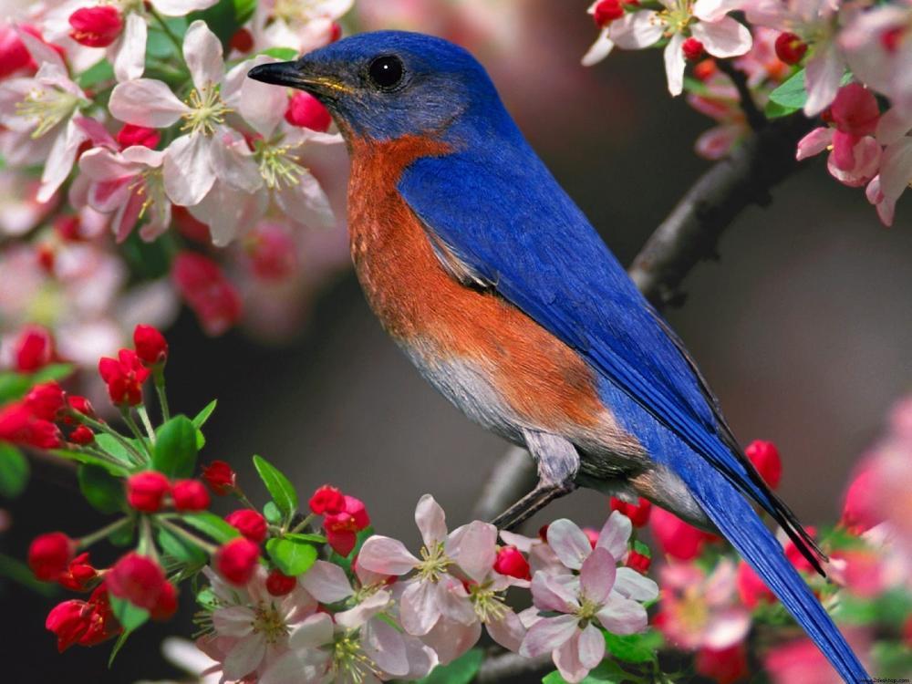 Từ vựng: Các loài chim trong tiếng trung