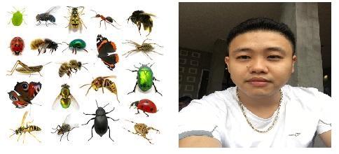 Từ vựng tiếng Trung về côn trùng