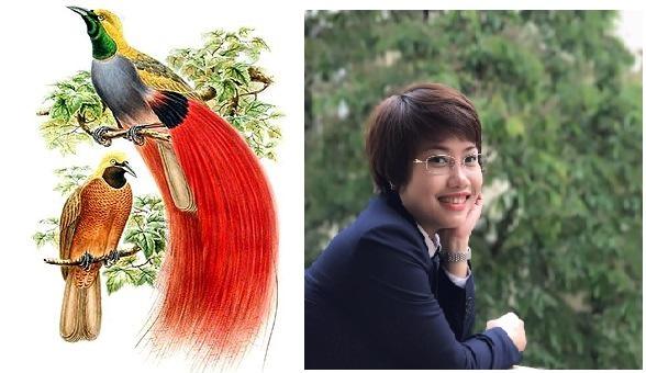 Từ vựng tiếng Trung về các loại chim
