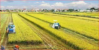 Từ vựng tiếng Trung về chủ đề nông nghiệp (P1)